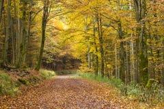 Outono na floresta imagem de stock royalty free