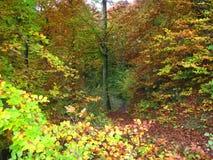 outono na floresta bávara imagem de stock royalty free