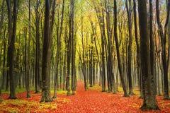 Outono na floresta colorida Fotos de Stock Royalty Free