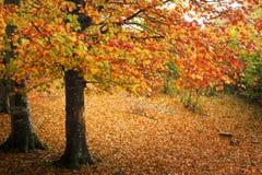 Outono na floresta colorida Foto de Stock