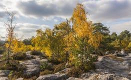 outono na floresta de Fontanebleau Foto de Stock