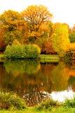outono na floresta em França Imagem de Stock
