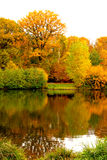 outono na floresta em França Foto de Stock Royalty Free