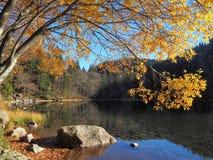 outono na Floresta Negra imagem de stock