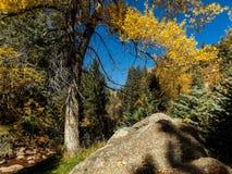outono na garganta fotografia de stock