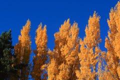 outono na ilha sul Nova Zelândia Foto de Stock Royalty Free