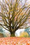 outono na jarda grave Fotografia de Stock Royalty Free