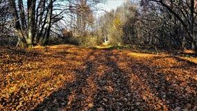 outono na montanha de Vitosha, Bulgária Imagem de Stock Royalty Free