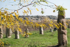 outono na reserva natural dos túmulos de pedra Fotografia de Stock Royalty Free