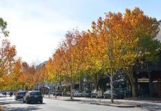 outono na rua de Lygon, Melbourne Imagem de Stock
