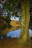 outono na sombra de Foresta, Gargano, Itália Fotos de Stock Royalty Free