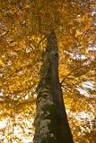 outono na sombra de Foresta, Gargano, Itália imagens de stock royalty free