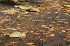 outono na tabela Fotos de Stock