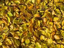 Outono na terra Imagens de Stock