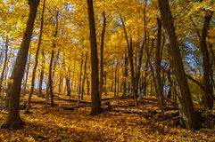Outono nas madeiras Fotografia de Stock Royalty Free
