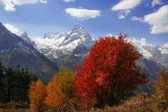 Outono nas montanhas Fotografia de Stock