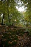 outono nas montanhas e nas florestas alemãs - algum MOU alemão da média Fotos de Stock