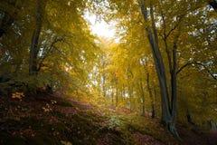 outono nas montanhas e nas florestas alemãs - algum MOU alemão da média Fotografia de Stock Royalty Free