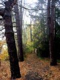 Outono nevoento fotografia de stock