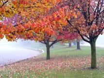 Outono nevoento Fotos de Stock Royalty Free