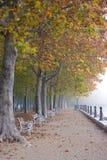 Outono nevoento imagem de stock royalty free
