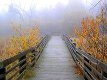 Outono nevoento foto de stock