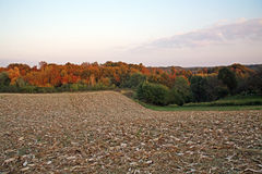outono no campo, 4 Fotos de Stock Royalty Free