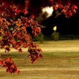 Outono no campo de golfe Imagens de Stock Royalty Free