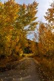 outono no Colorado Rocky Mountains fotografia de stock