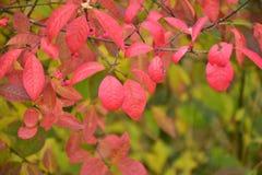 outono no dia ensolarado, almofada da floresta Imagens de Stock Royalty Free
