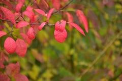 outono no dia ensolarado, almofada da floresta Fotos de Stock