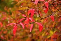outono no dia ensolarado, almofada da floresta Imagens de Stock