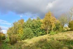 outono no dia ensolarado, parque, árvore, ramos Fotos de Stock