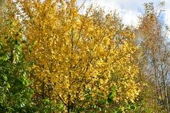 outono no dia ensolarado, parque, árvore, ramos Imagens de Stock Royalty Free