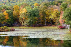 Outono no lago Fotografia de Stock Royalty Free