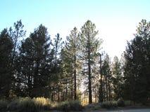 outono, 2017 no lago big Bear, Califórnia: cena densa da floresta fotografia de stock royalty free