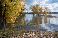 outono no lago dog preto Imagem de Stock