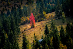 outono no monte Fotos de Stock Royalty Free