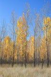 Outono no país Fotografia de Stock Royalty Free