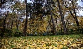 Outono no parque Imagem de Stock Royalty Free