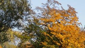 Outono no parque filme