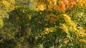 Outono no parque video estoque