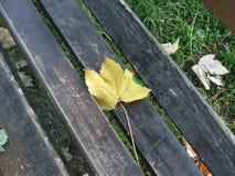 Outono no parque Fotografia de Stock Royalty Free