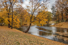 Outono no parque Imagem de Stock