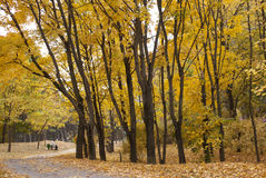 Outono no parque Fotos de Stock Royalty Free