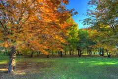 outono no parque da cidade Foto de Stock