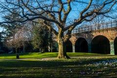 outono no parque de Ravenscourt, Londres fotografia de stock royalty free
