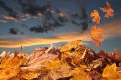 Outono no por do sol Foto de Stock Royalty Free