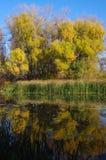 Outono no rio Fotos de Stock