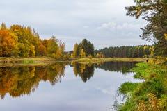 outono No rio Mologa Fotografia de Stock